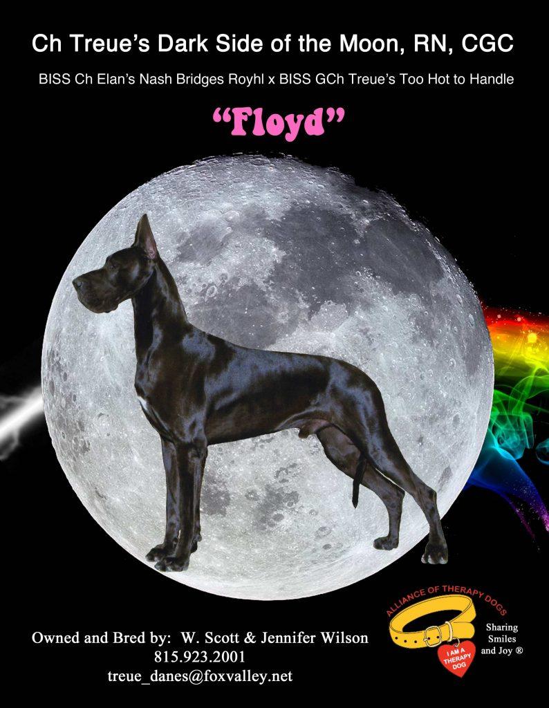 Floyd GDR Stud Dog Ad