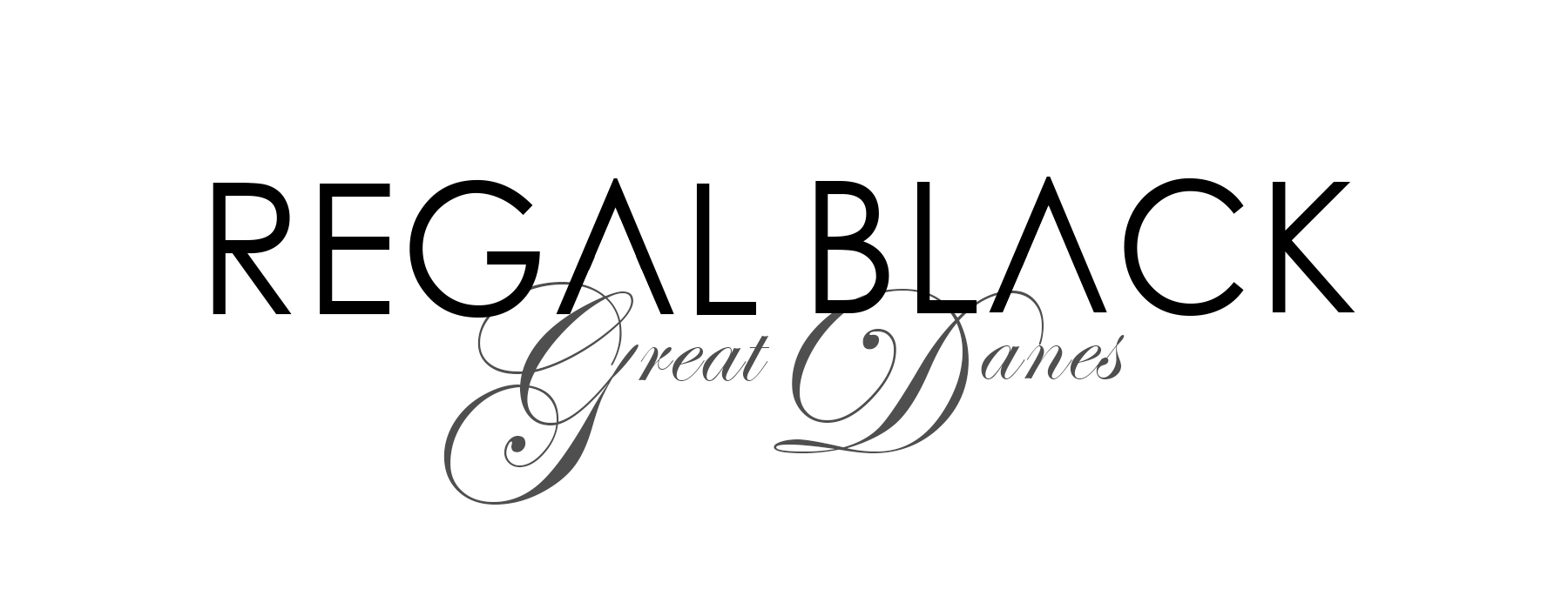 Regal Black Great Danes